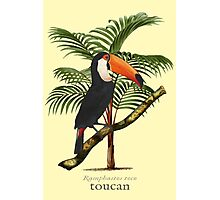 Toucan Tropics Photographic Print