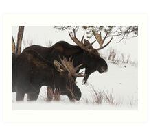 Moose Bros. #2 Art Print