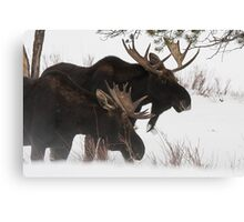 Moose Bros. #2 Canvas Print