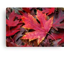 Autumn Maple Leaf on Forest Floor Canvas Print