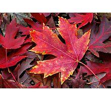 Autumn Maple Leaf on Forest Floor Photographic Print