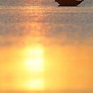 Grey seal at sunrise by Remo Savisaar