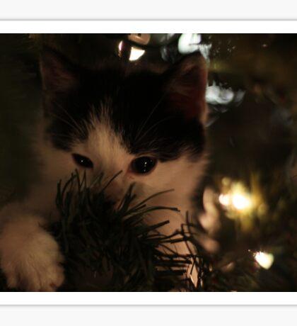 Merry Cat-mas Sticker