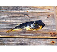 Blue Eyed Whatisit Fish Photographic Print