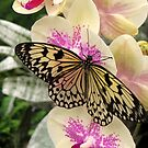 Paperkite on Orchid by ienemien