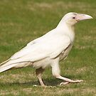 """Dare To Be Different"" (Rare White Raven) by Skye Ryan-Evans"