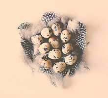 quail eggs nest by Ingz