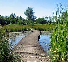 Little Bridge and Stream in June by ienemien