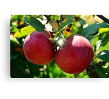Apples, Apples, Apples Canvas Print