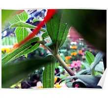 Plant Stalk Poster