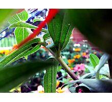 Plant Stalk Photographic Print