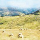 Sheep Mist by PictureNZ