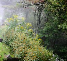 Wildflowers and fog by Conjon863
