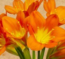 Orange Clivia Lily Blossoms - Textured  Sticker