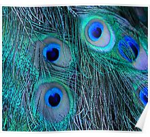 Feathery eyes Poster