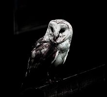 Barn Owl by Maybrick