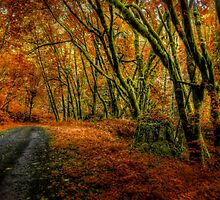 I Have Changed ~ Fall Colors ~ by Charles & Patricia   Harkins ~ Picture Oregon