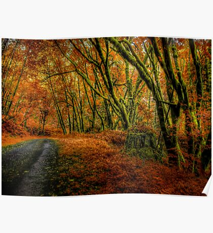 I Have Changed ~ Fall Colors ~ Poster