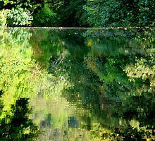 River Earn Weir by Nik Watt