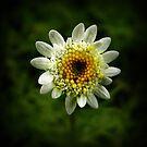 Little flower, big detail by iamelmana