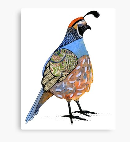 California Quail Canvas Print