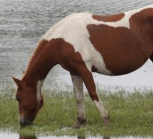 Chincoteague Pony grazing in marsh Sticker