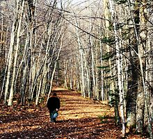 Lovely fall walk by Kelly  McAleer