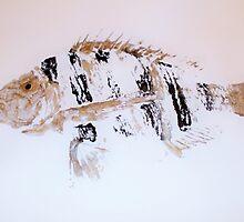 Sheephead Fish Rubbing by alan barbour