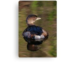 Grebe on Reflective Water Canvas Print
