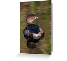 Grebe on Reflective Water Greeting Card