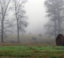 Foggy Fields by Kyle Wilson