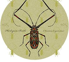 Harlequin Beetle Tshirt - w/background   by 40degreesSouth