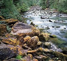 Staircase Rapids, Skokomish River, Olympic National Park, Washington by Vern Treat