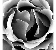 Dark heart Photographic Print