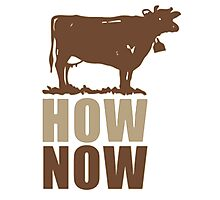 How Now Brown Cow Photographic Print