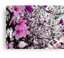 Lost in Blossoms Canvas Print