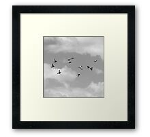 Untitled - flock of birds Framed Print