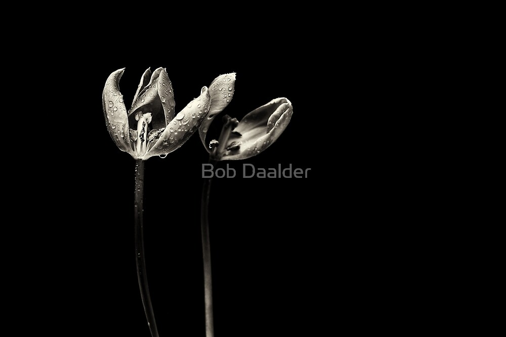 The end is near....  by Bob Daalder