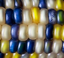 Flint Corn Color by Kenneth Keifer