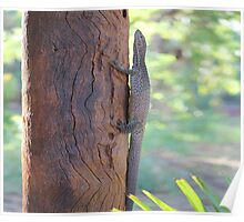 Baby monitor lizard 2 Poster