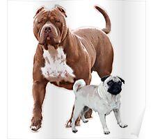 Pit bull pug 2 Poster