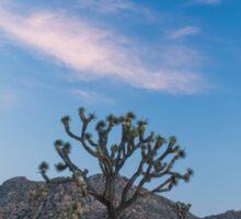 Joshua Tree National Park at sunset Sticker