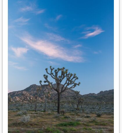 Joshua Tree National Park at sunset Sticker
