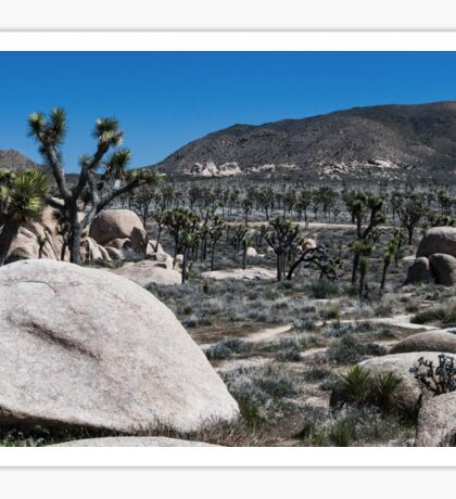 A field of Joshua Trees Sticker