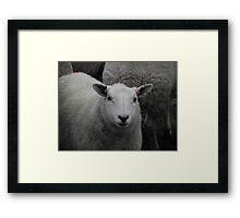 Precious wee lamb Framed Print