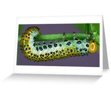 Hungry Caterpillar Greeting Card