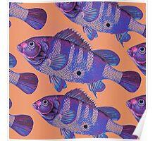 Antique fish 1 Poster