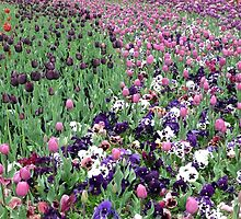 Floriade Canberra - A by THERESA DUONG