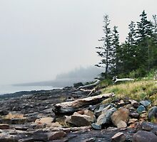 A misty evening in Delaps Cove by Shonda Hogan