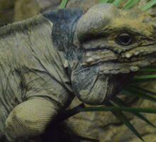 rhino iguana Sticker